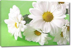 Букет Белые ромашки на зеленом фоне