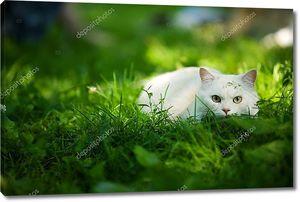 Белая кошка на охоте
