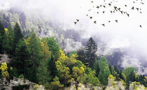 Облака на лесных склонах