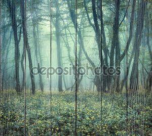 След через таинственный темный лес в тумане