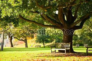 Парк Королевские ботанические сады Кью