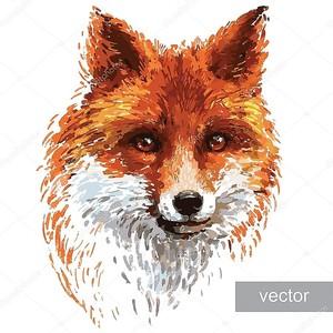 Фокс цветные иллюстрации на белом фоне
