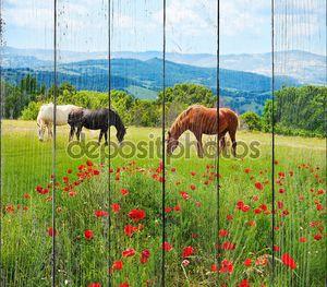там лошадей, пасущихся трава
