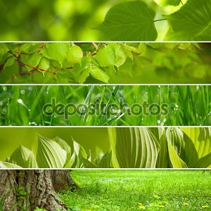 коллаж природой зеленый фон.