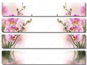 Светлый фон с орхидеями