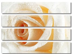 Желтая нежная роза