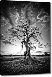 Только Мертвое дерево на шоссе страны в черно-белом.