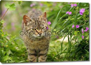 Серый кот в природе цветущих весной