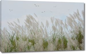 Метелки травы