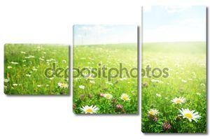поле полевых цветов