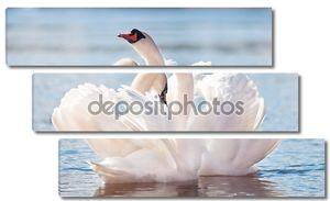Пара лебедей вместе на воде