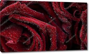 Фон с красными бархатными розами