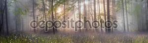 Карпатский лесных деревьев
