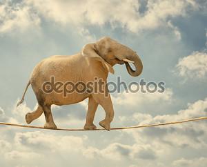 слон, идущий на веревке
