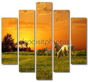 Семья лошадей на закате