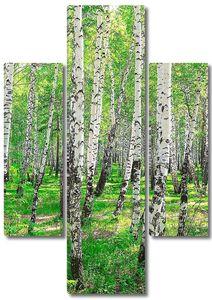 Березовый лес летним днем