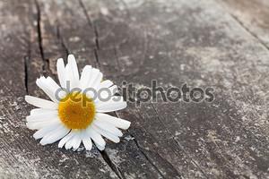 Цветок на деревянном столе