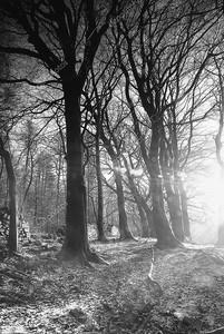Низкая зимнее солнце - Англия