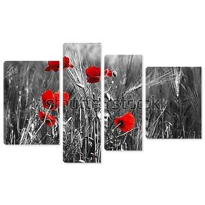 Красные маки в поле