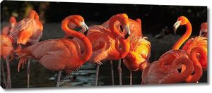 Американский фламинго на красивым закатом