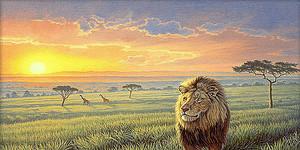 Одинокий лев