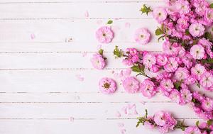 Мелкие розовые цветы на досках