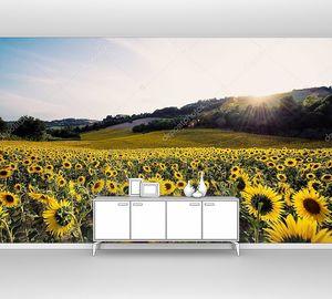 желтые подсолнухи поле в солнечный день