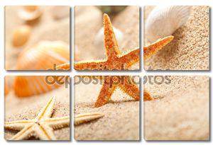 Морская звезда и морских раковин на песке