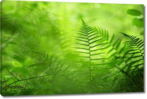 Лесной зеленый папоротник в лучах солнца