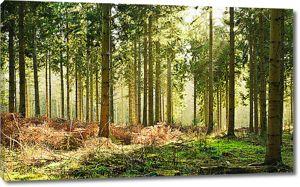 Жухлая трава в лесу