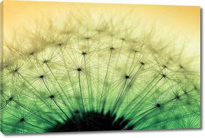 Макро Цветок одуванчика