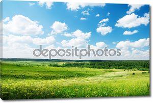 Летний солнечный день и поле цветов