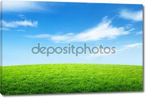 поле травы и прекрасное небо