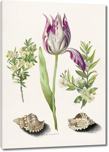 Тюльпан, две ветви мирта и две ракушки