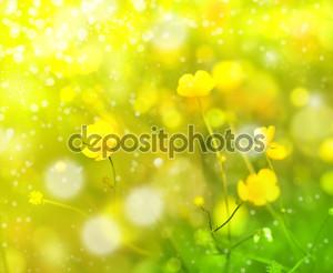 Полевые цветы, лютик