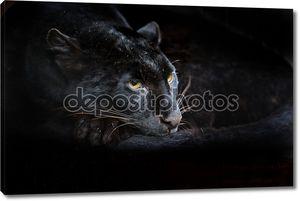 Портрет пантера