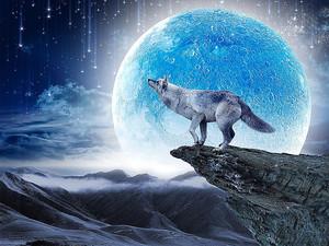 Волк на чужой планете