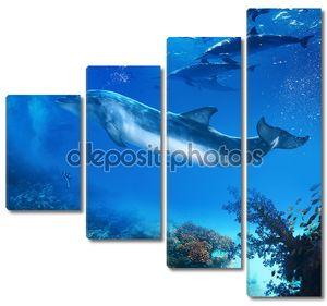 Забавный Дельфин подводный позирует