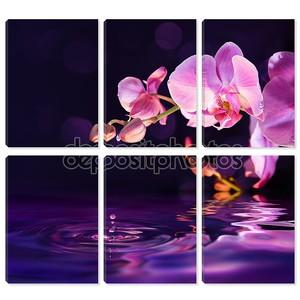 Фиолетовые орхидеи и падения воды