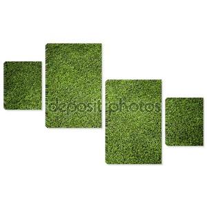 структура травы