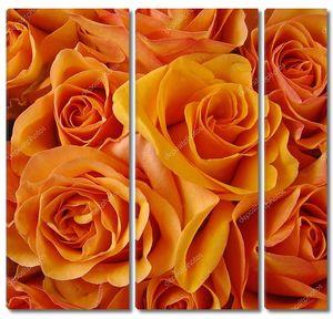 Оранжевые бутоны роз