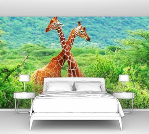 Битва двух жирафов