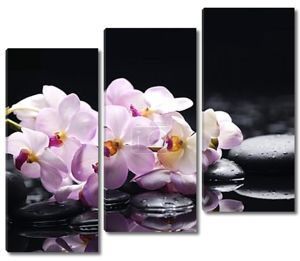Орхидея на камнях