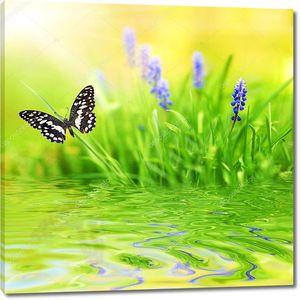 Красивая бабочка, голубой цветок