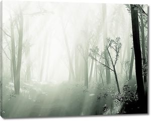 Туман на лесном озере