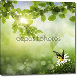 Бабочка, свежий весенний фон Бока