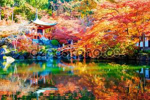 осенью японский сад с клен в Киото, Япония