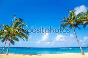 Пальмовых деревьев на песчаном пляже в Гавайи