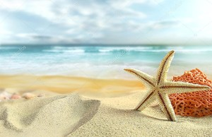 Морская звезда на пляже