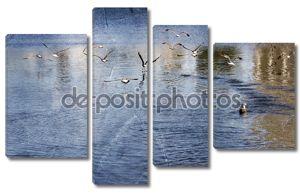 Утки на воде. озеро в городе